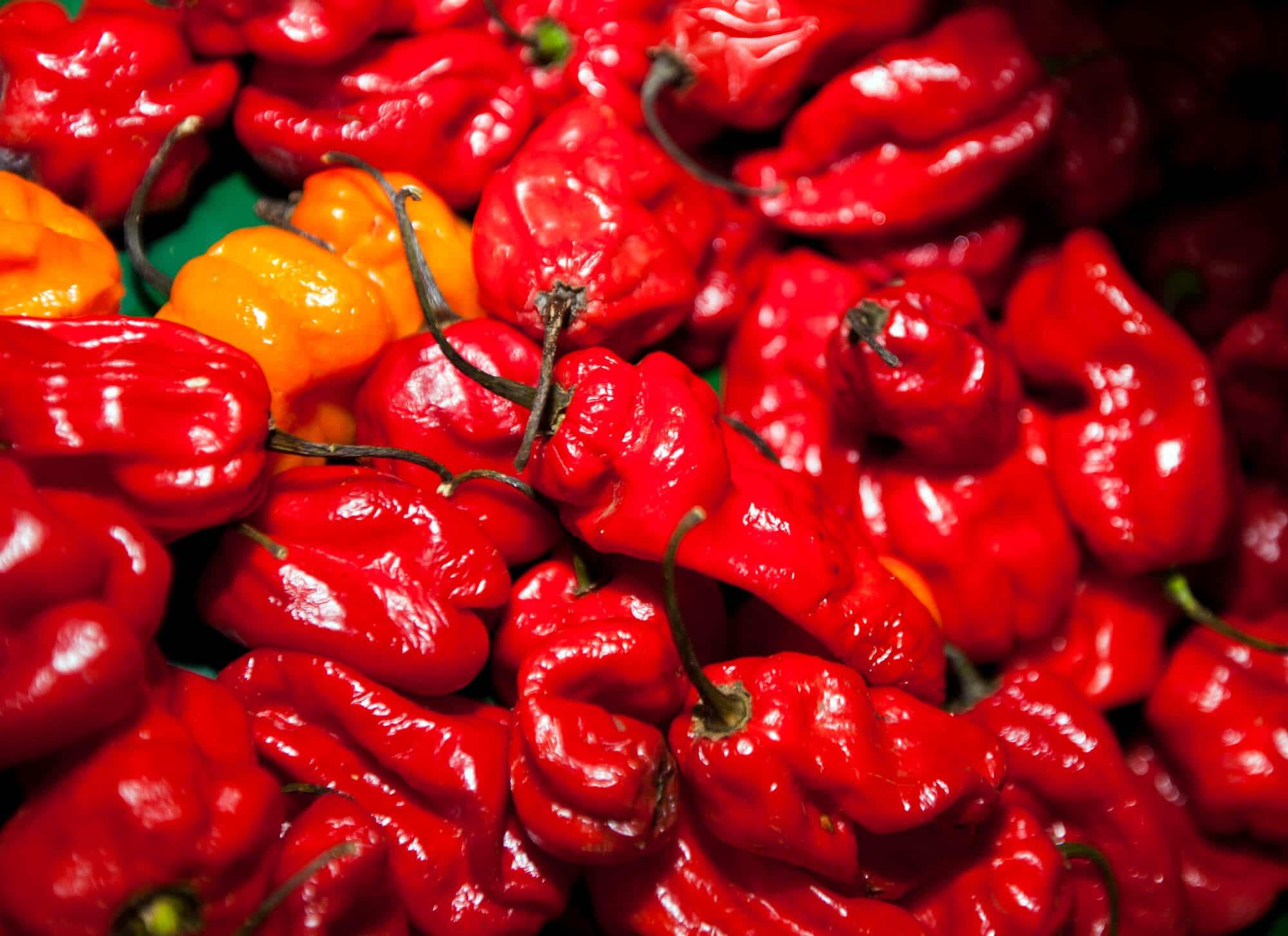 red chillies - El Rincon
